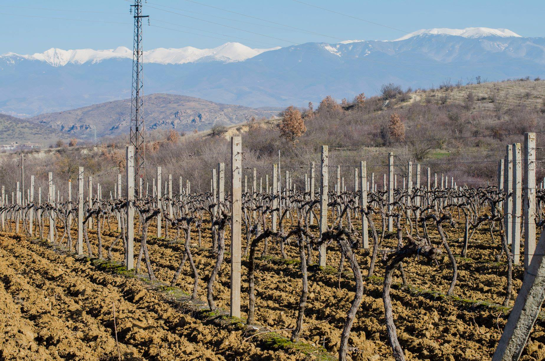 Wijngaarden in dorp Kolarovo