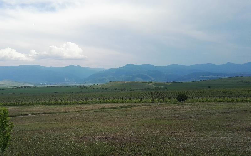 Bessa Valley wijngaarden vlakbij Plovdiv