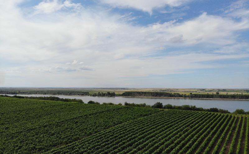 Bonania wijngaarden aan Danube rivier