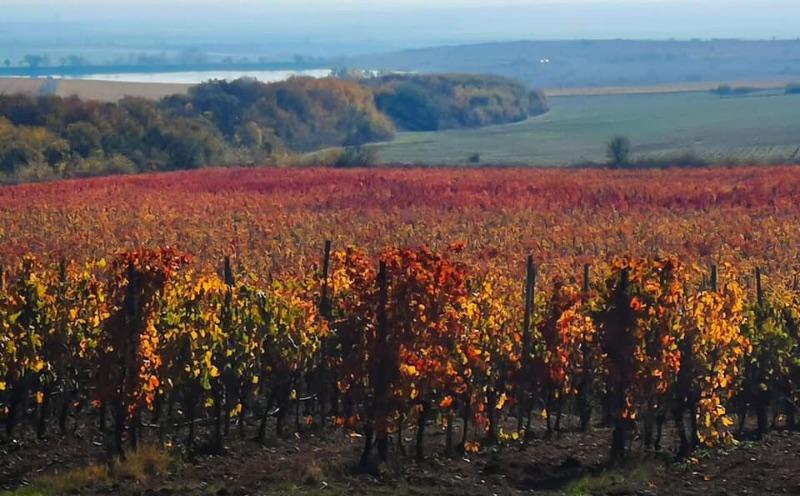 Wijngaarden bij dorpje Elenovo