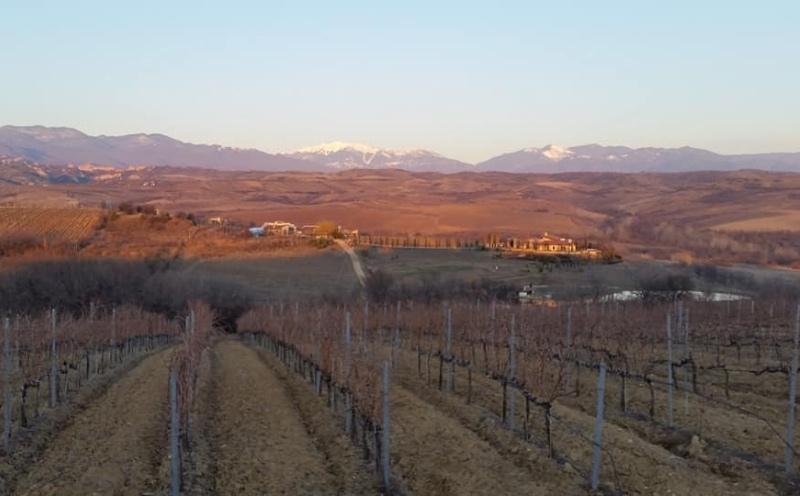 Wijngaarden van Kapatovo in Melnik