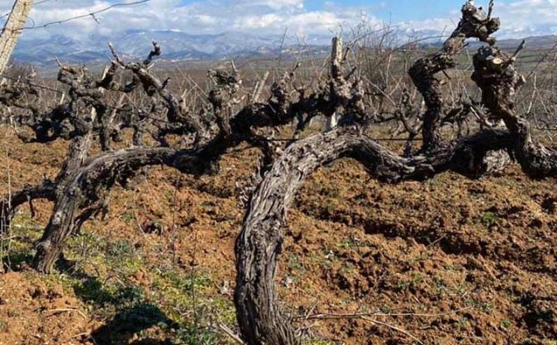 Wijnbouw in Strumay Vallei