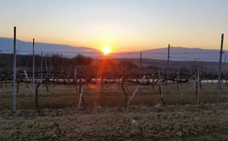 Wijngaarden Zuid-Westen van Bulgarije
