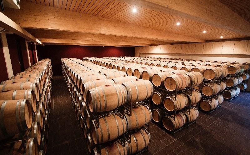 Wijnkelder van Salzl in Illmitz