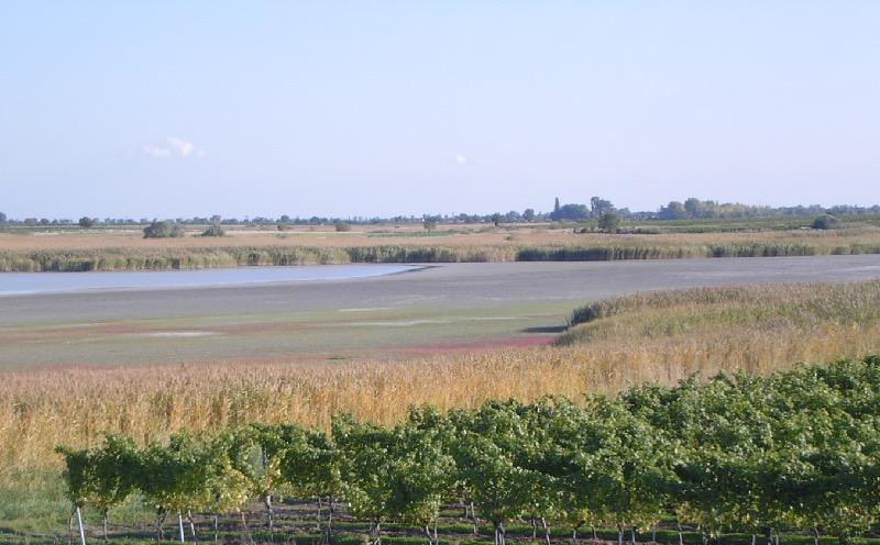 Salzl bij meer van Illmitz