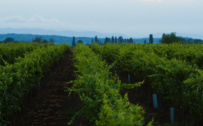 Wijndomein Salzl in Burgenland