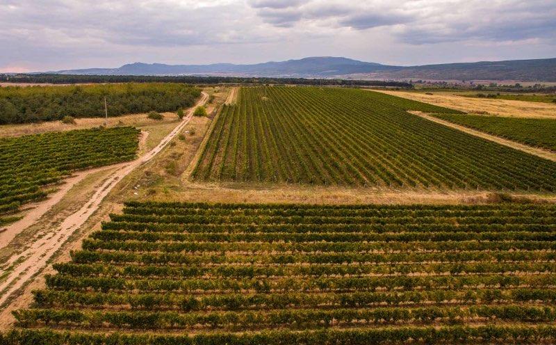 Wijngaarden in dorp Slavyantsi