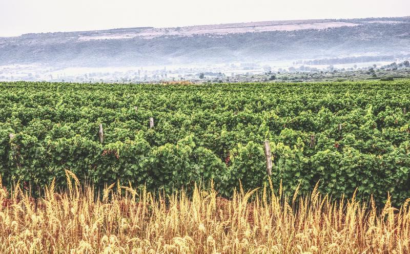 Wijngaarden van Zelanos